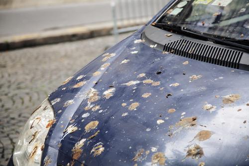 車に鳥糞がついてしまった場合